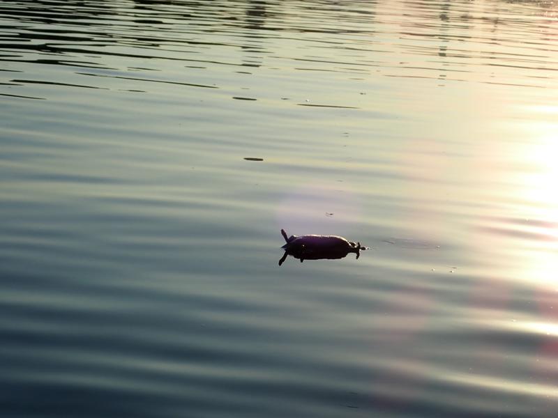 Blanket Organic Algae Remover Fish Pond Water Clear Treatment Reduces Sludge Pleasant To The Palate Fish & Aquariums Pet Supplies